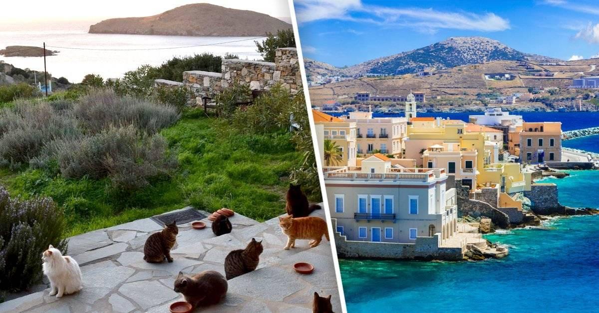 Si te gustan los gatos, en esta isla puedes vivir gratis con todo pago