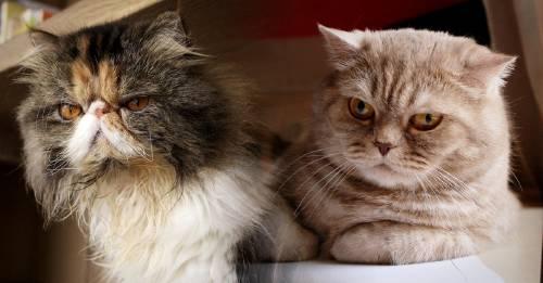 Así es como puedes saber que tu gato está enojado contigo