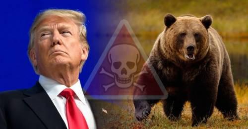 Donald Trump elimina medidas de protección a los osos y permitirá engañarlo..