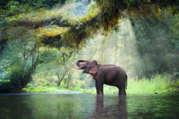 elefante bosque