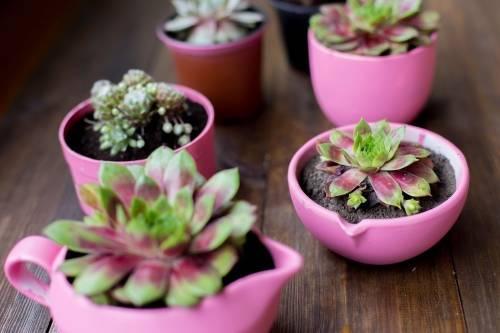 7 plantas que se riegan una vez por semana