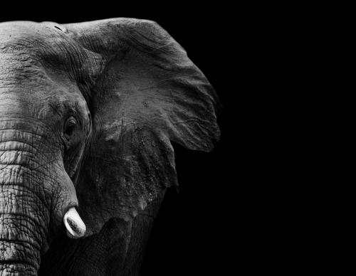 ¿Por qué se celebra el Día Mundial de los Animales el 4 de octubre?