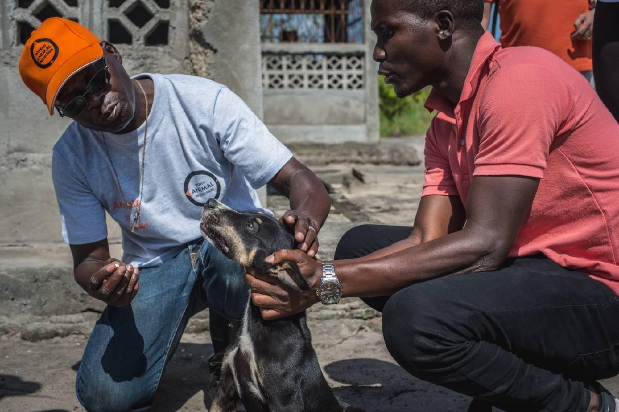 Miles de animales reciben ayuda tras el duro ciclón Idai