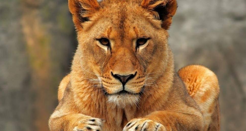 7 especies animales donde las hembras llevan el mando