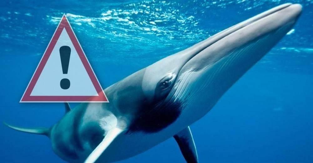 """Japón mata cientos de ballenas bebés y embarazadas por una misión """"científ.."""