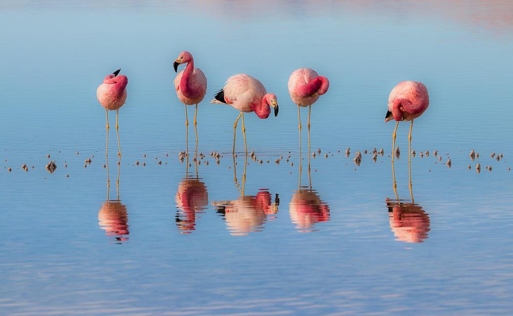Por qué el avance del litio daña al ecosistema y pone en peligro a los flamencos