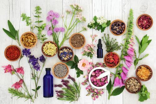 Guía completa de antibióticos naturales: cuáles son y cómo usarlos