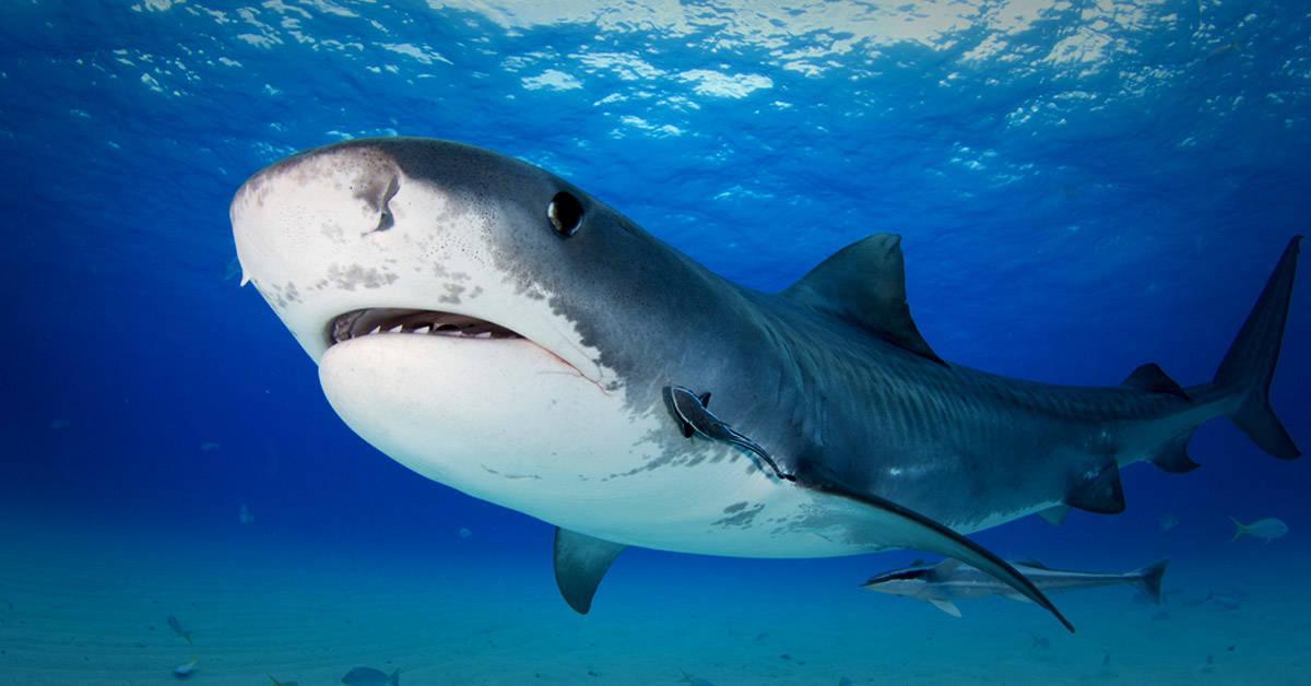 8 datos increíbles sobre los animales que nunca antes habías escuchado