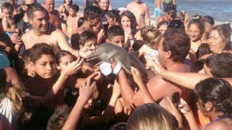 Turistas asesian al Delfin Franciscana