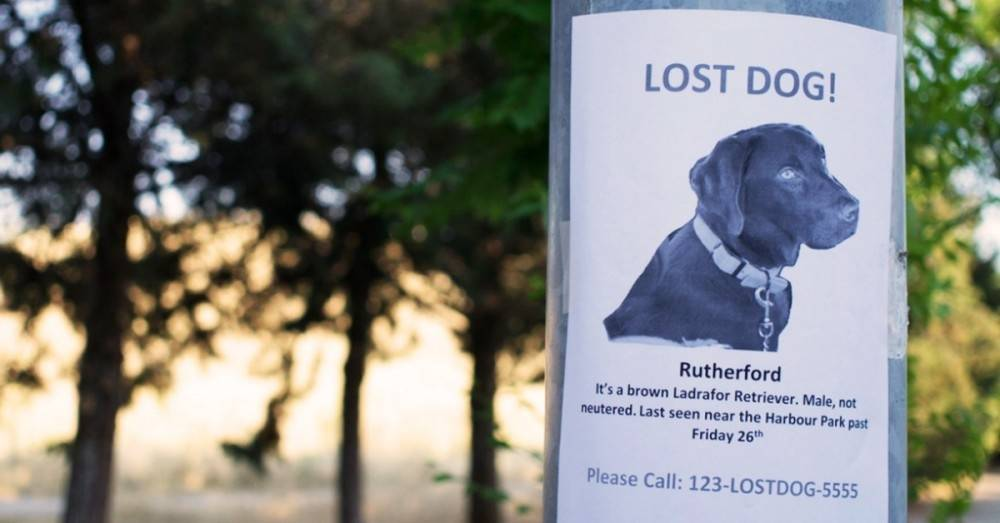 ¿Qué hacer si se pierde tu perro?