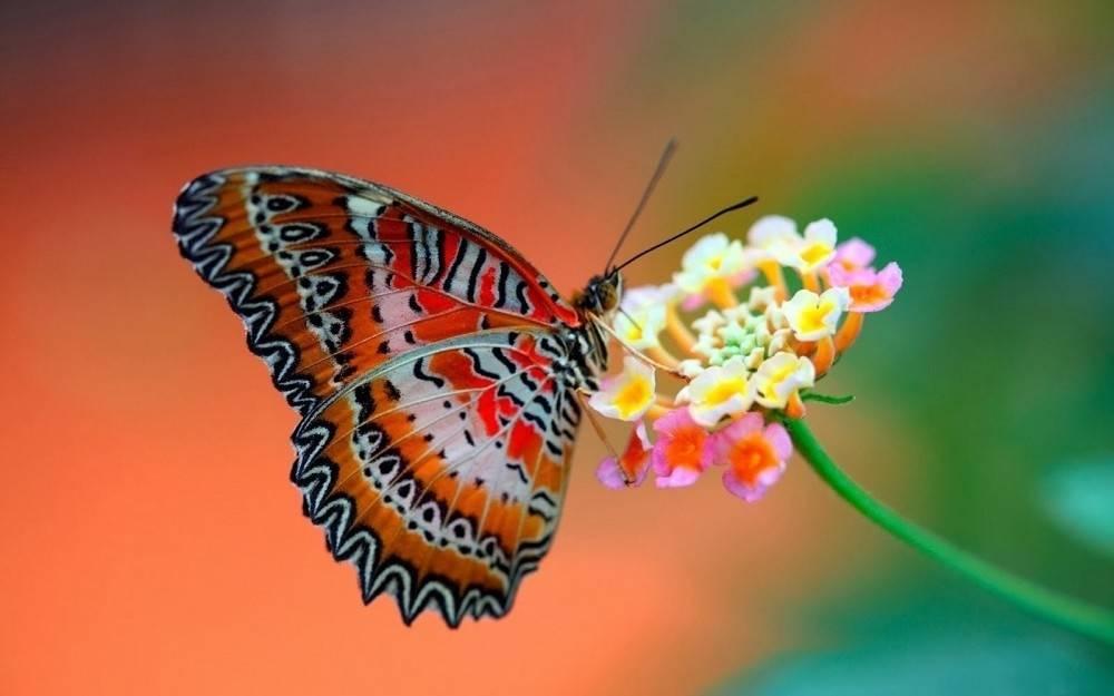 15 mariposas únicas y hermosas