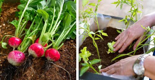 Crea un huerto urbano en casa y produce tus propios alimentos