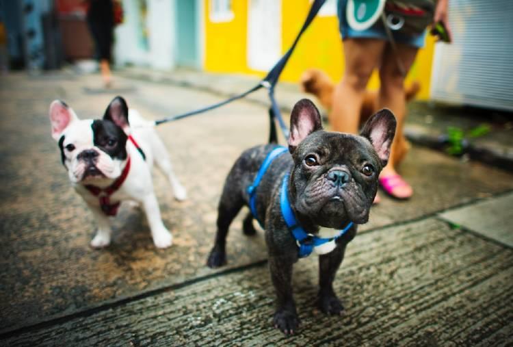 Caminar con tu perro puede ser una forma efectiva de combatir el sedentarismo