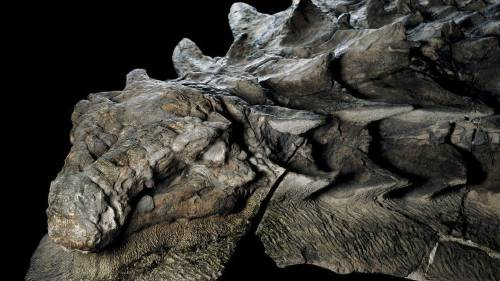 Encuentran en Canadá un increíble fósil de dinosaurio que permanece intacto