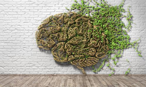 planta cerebro