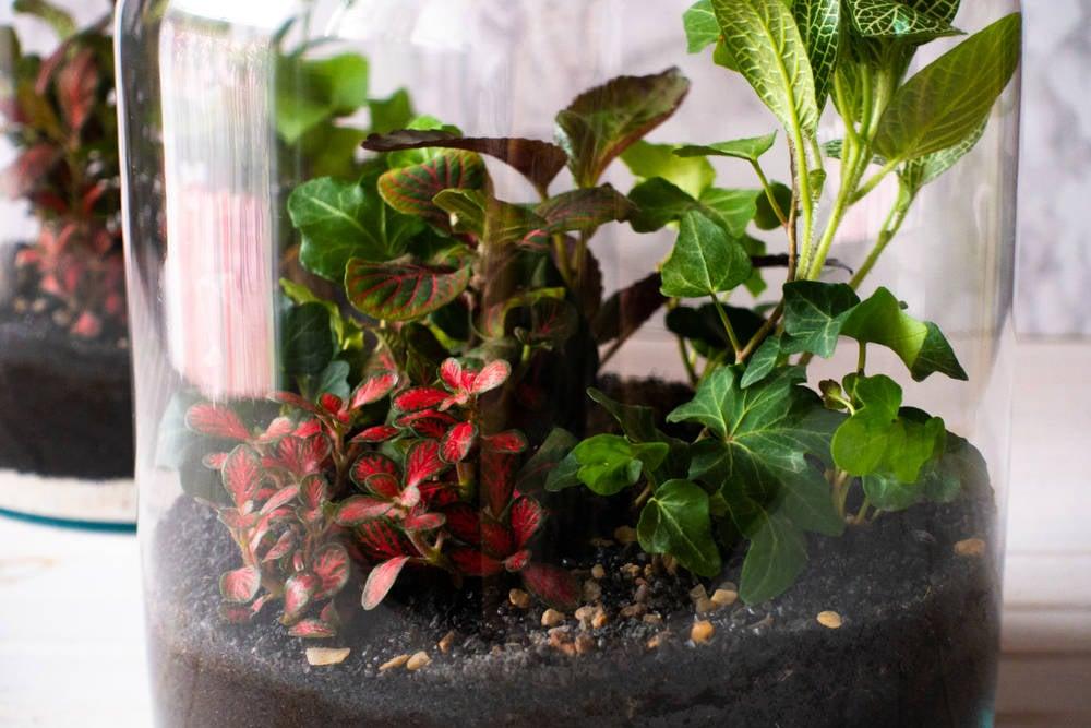 Paso a paso: cómo hacer un terrario eterno para tener en casa