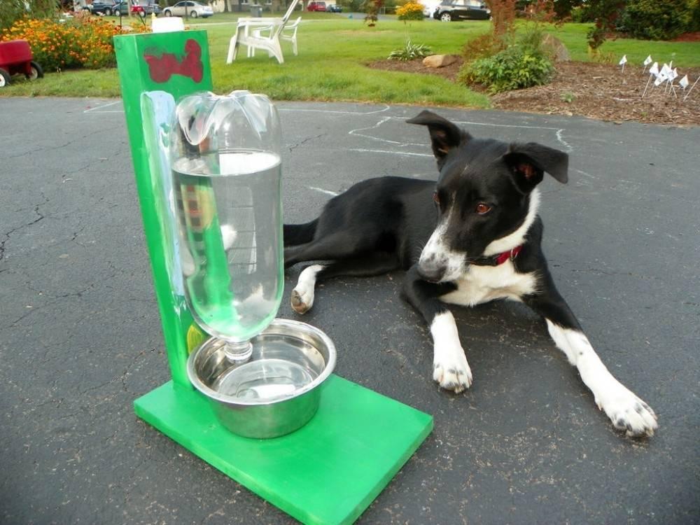 Cómo hacer un recipiente que se autorellena para tu mascota