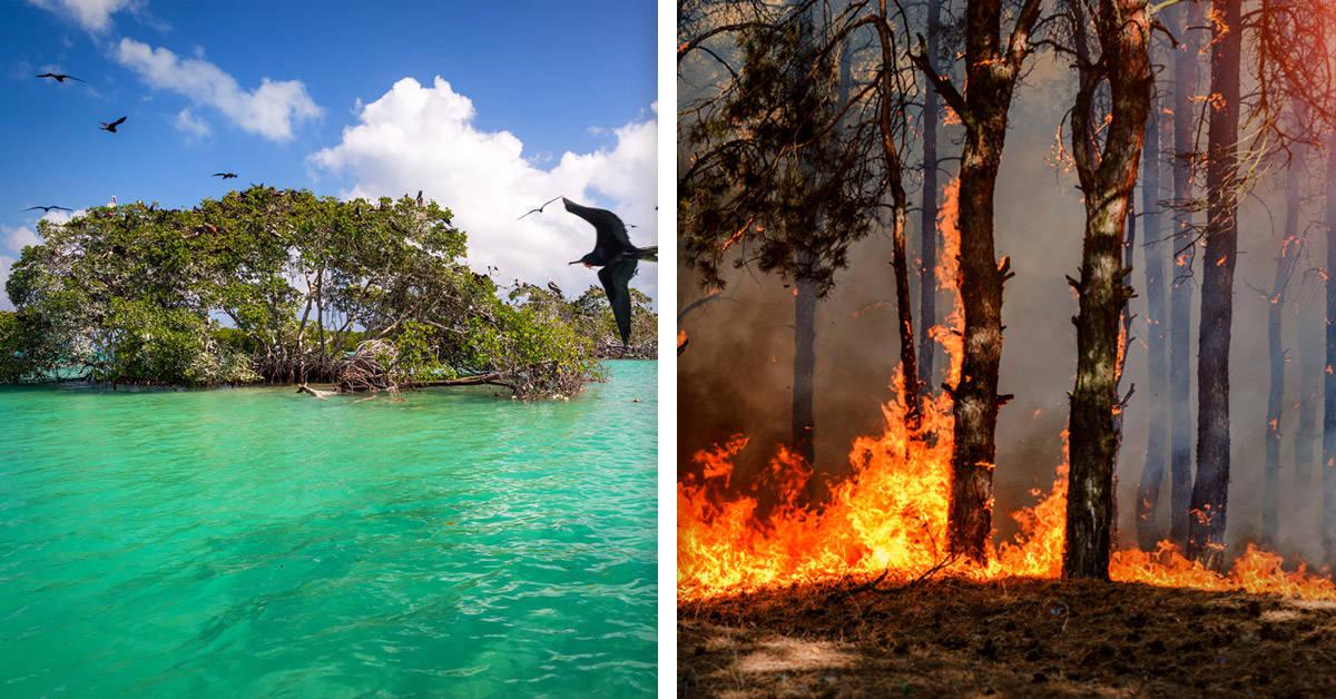 Por qué debería preocuparte el incendio forestal de la reserva de Sian Ka'an