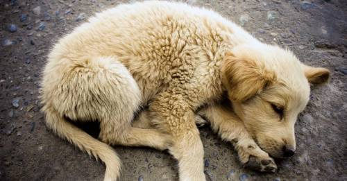 """Encontró a un perro """"dormido"""", pero al acercarse notó que algo estaba muy mal"""