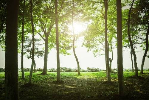 Los proyectos de reforestación más impactantes de la historia