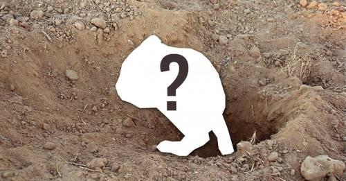 Después de 30 años de su supuesta extinción, ¡encuentran especímenes de e..