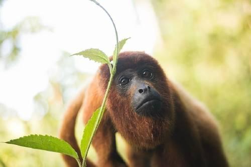 Cómo hace una Reserva del Amazonas Peruano para cuidar nuestros tesoros
