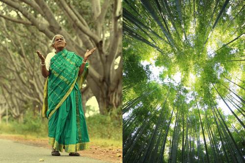 """Se la conoce como la """"mujer de los bosques"""" y ha plantado casi 10.000 árboles"""