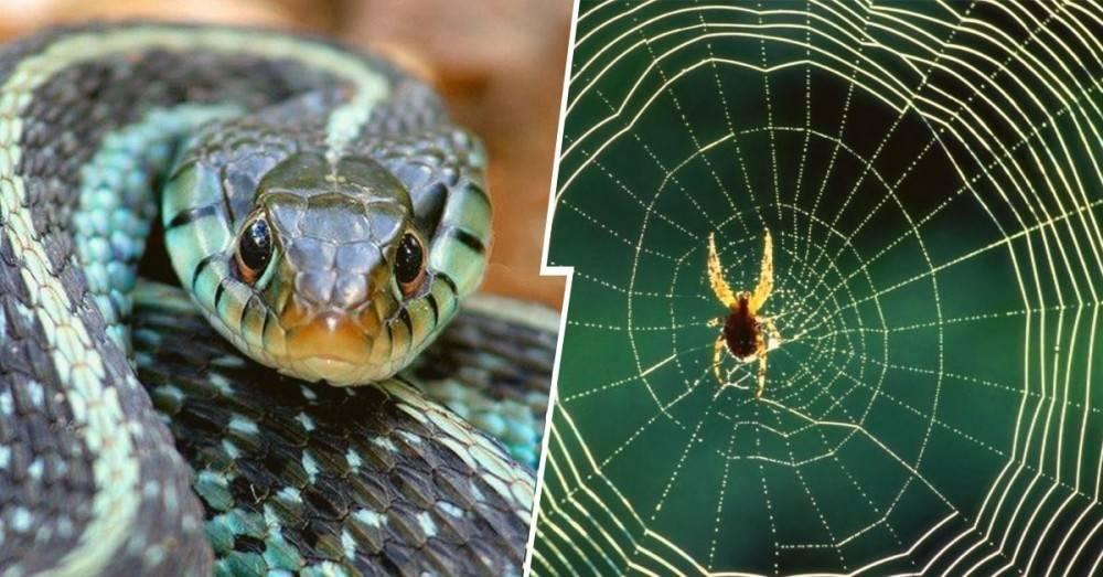 ¿Nacemos con miedo a las arañas y serpientes? Si les temes, necesitas leer e..