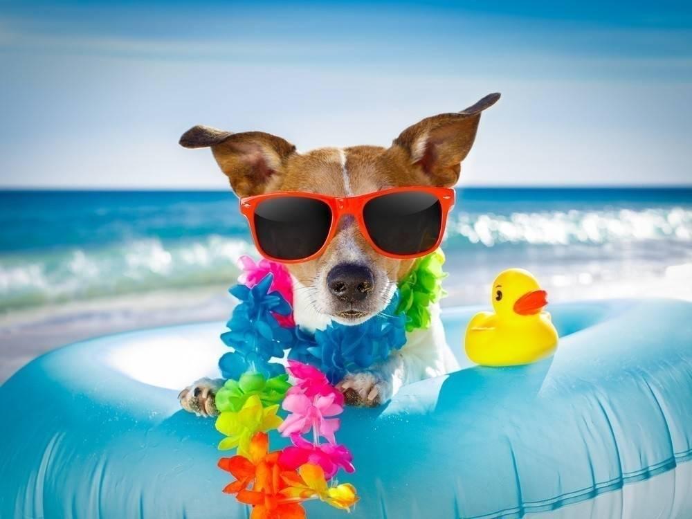 Éstas son todas las playas a las que puedes ir con tu mascota