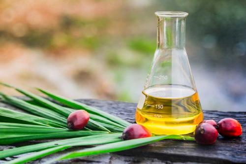 Científicos crean una alternativa ecológica al aceite de palma