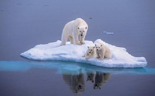 Esto es lo que hemos hecho: el cambio climático está matando de hambre a los osos polares