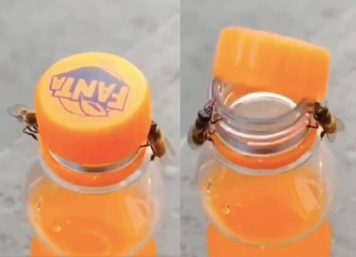 Increíble video muestra a dos abejas abriendo una botella de Fanta