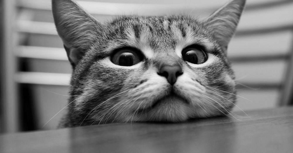 """""""La curiosidad mató al gato"""" y el origen de otros de los dichos que más se r.."""