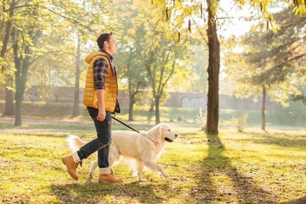 dar un paseo