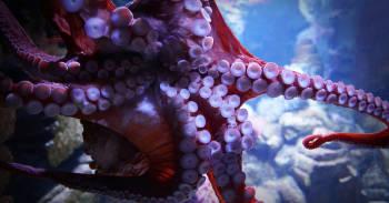 tentaculos de un calamar gigante