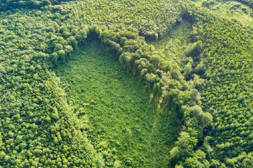 vista-aerea-arriba-abajo-bosque-verde-verano-gran-area-arboles-talados-como-resultado-industria-mundial-deforestacion-influencia-humana-nociva-ecologia-mundial_127089-3612