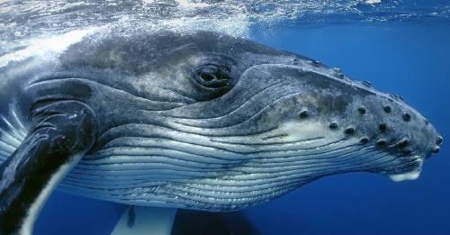 A pesar de las críticas y preocupaciones, Japón volvió a cazar ballenas con fine