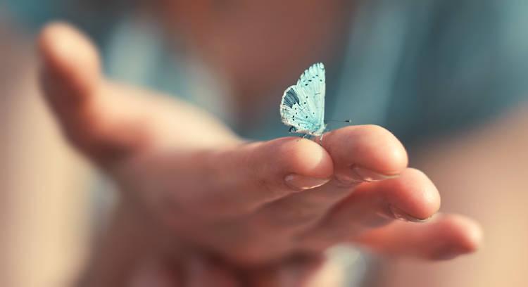 mariposa mano