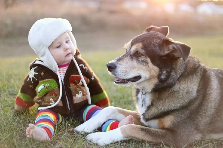 perro acompañando a un niño bebé