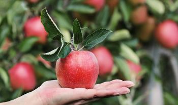 Manzana: ¿Cuántas calorías tiene una? Tipos y propiedades