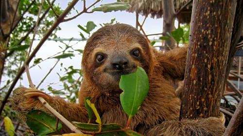 América Latina, unida para conservar la biodiversidad