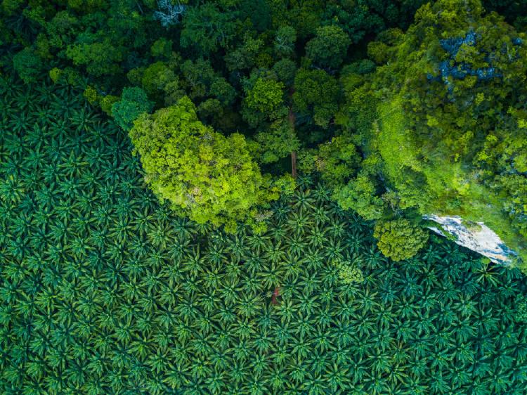 produccion de aceite de palma