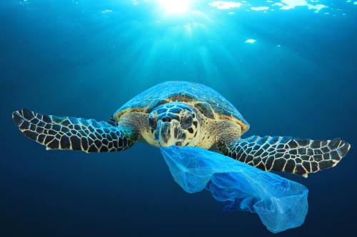 Así es el mar plástico que baña el Caribe Lationamericano