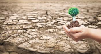 desierto desertificacion plantar arboles