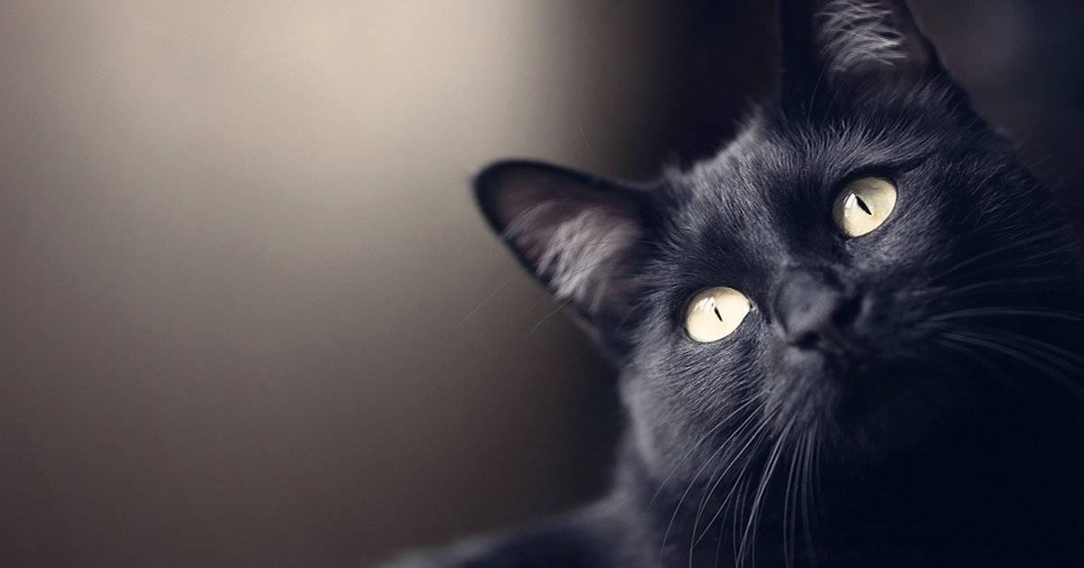 Los gatos, protectores del hogar contra fantasmas y energías negativas