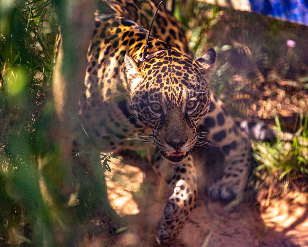 Cómo proteger la flora y fauna para detener la crisis ambiental