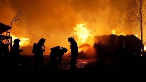 Incendios en chile: ¿la culpa es de los monocultivos?