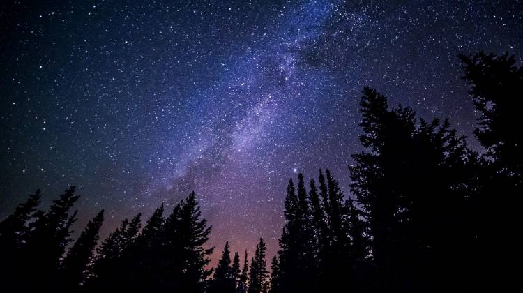 Vista del cielo estrellado entre los pinos de un bosque