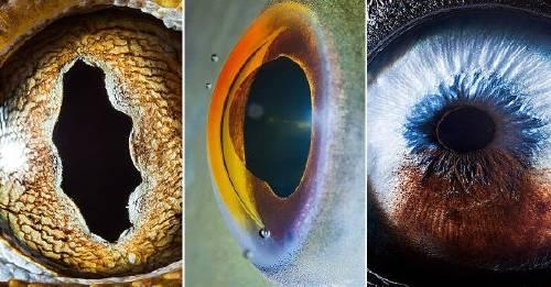 43 impresionantes imágenes de ojos de animales