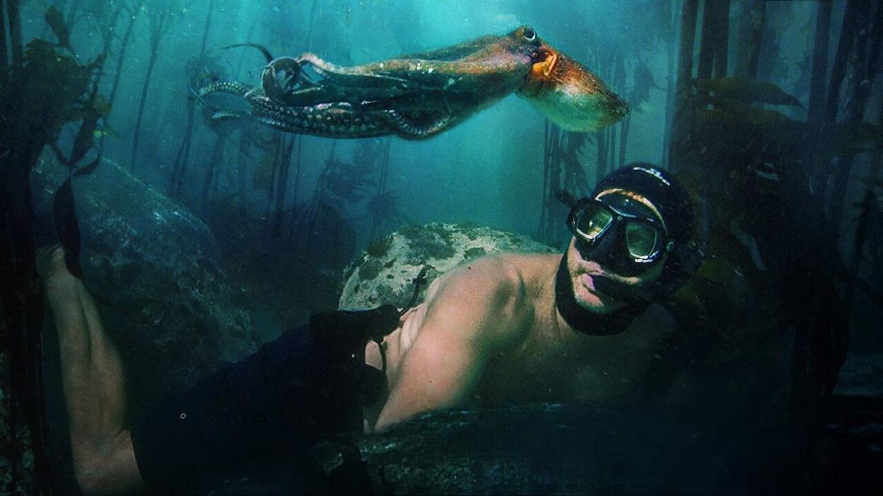 «My Octopus Teacher», un documental que nos muestra los misterios del océano